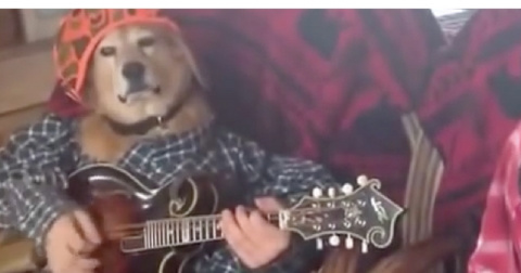 Собаки играют кантри
