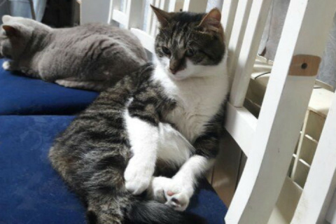 Эрмитажный кот, сбежавший из Музея, спас щенка