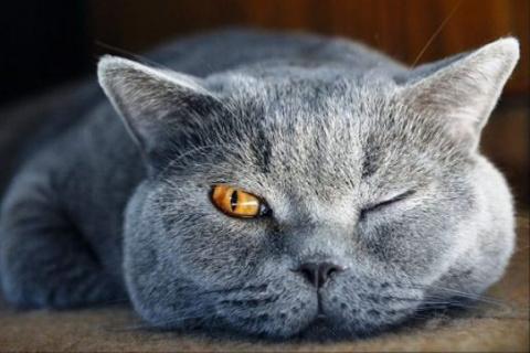Умный кот сам научил  хозяин…