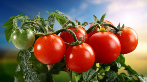 Кефир – защитник томатов от фитофторы. Пионы - все секреты выращивания и ухода