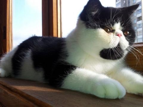 Маленькие рассказы про кошек