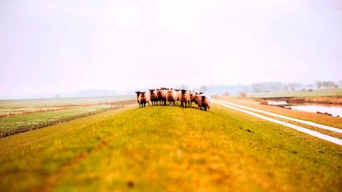 Румынские овцы сорвали работ…