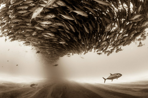 Конкурс фотографий Sony World Photography Awards 2017
