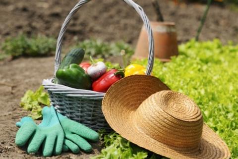 Выращиваю овощи без химии более 60 лет!