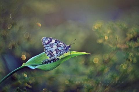 Нежные фотографии природы Katarzyna Załużna