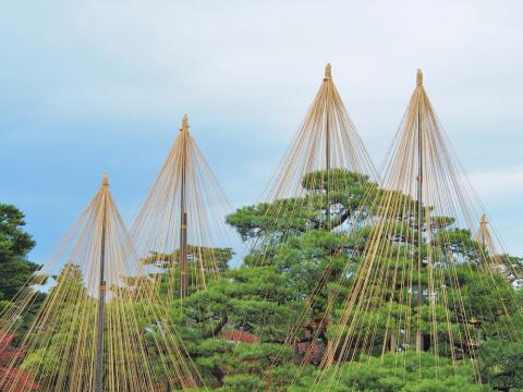 Шатер для ёлки. Как защизают деревья от непогоды