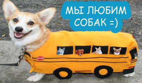 Милые и смешные животные (мн…