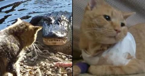 Эти героические коты спасли …