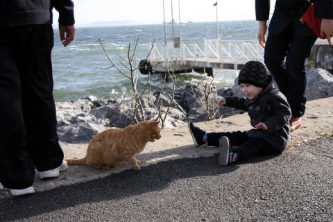Стамбул – город кошек