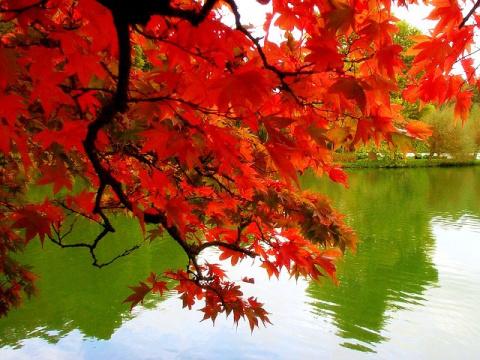 Красочные осенние сады