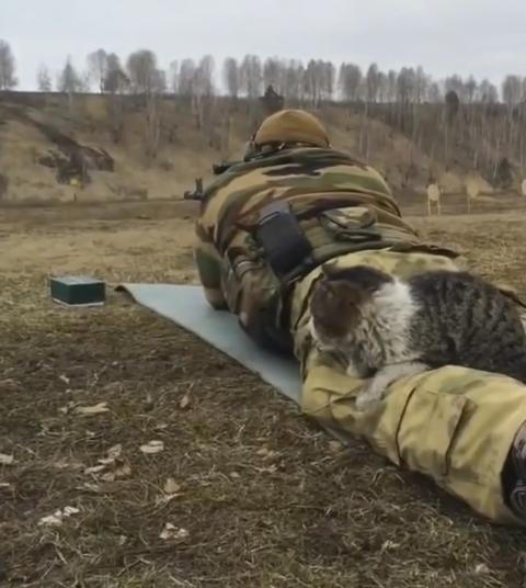 Армейские будни кота Старлея