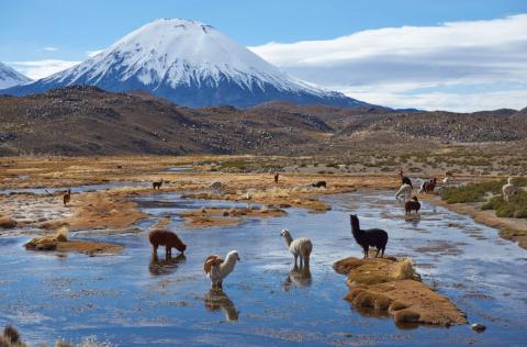 Вдохновляющая природа в парках Южной Америки