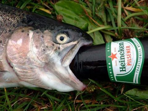 Рыба Сходит с Ума от ПИВА...