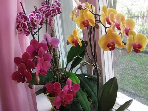 Всё, что нужно знать о цветении орхидей: секреты правильного ухода!