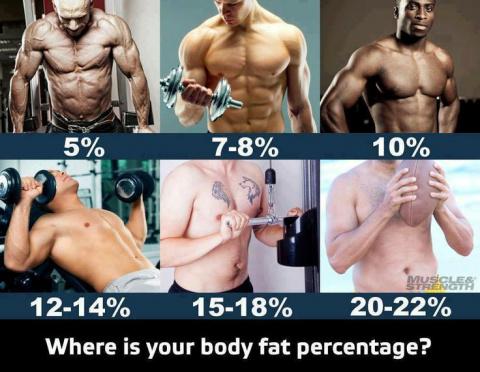 Все о проценте жира в организме