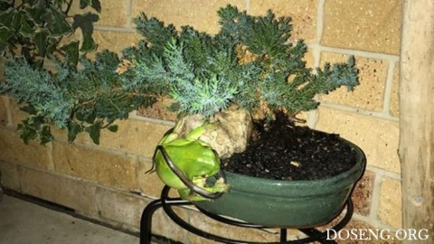 Голодная лягушка пообедала хищником