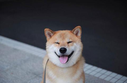 Радостная собака заперла сво…