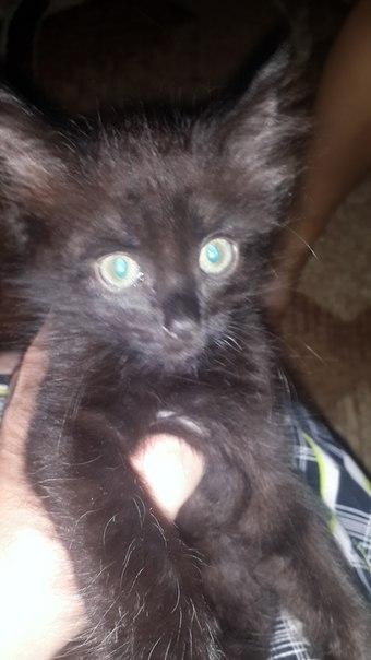 В жарком июле в наш кошачий двор подкинули крошечного черного заморыша...