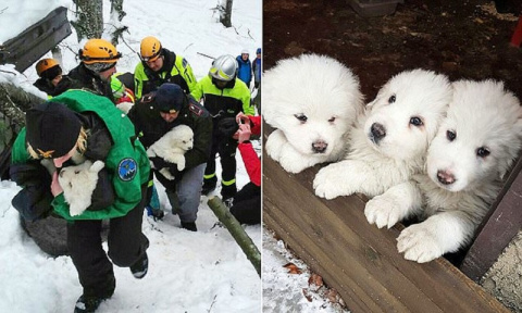 Из развалин отеля, разрушенного лавиной, спасатели достали троих щенков
