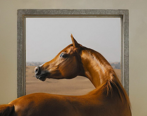 Выразительные животные в фотографиях Tim Flach