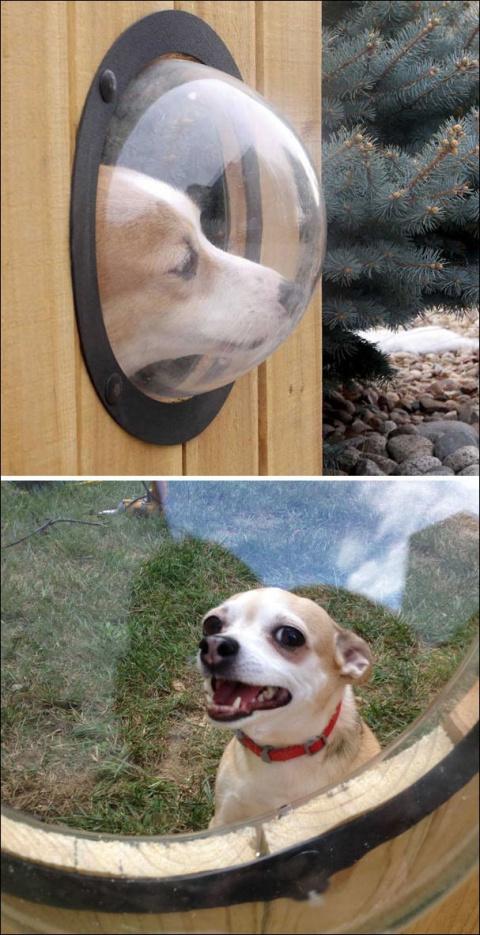 Креативные владельцы собак, …