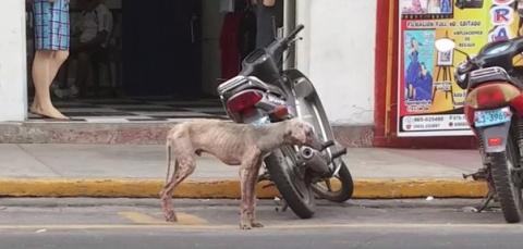 История спасения щенка, кото…