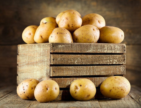 Как правильно отобрать картофель на семена