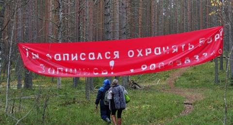 Парфенчиков решил проблему Сунского бора в Карелии