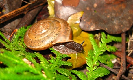 New species of snail named in celebration of same-sex marriage