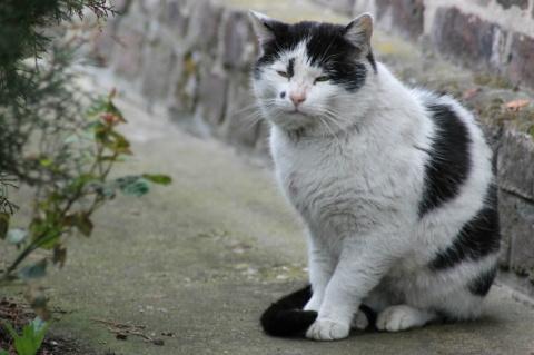 Кот Васька всем «рассказал» …