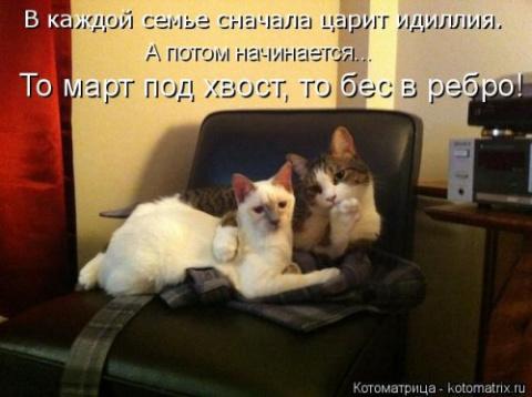 Новая котоматрица на Бугаге …