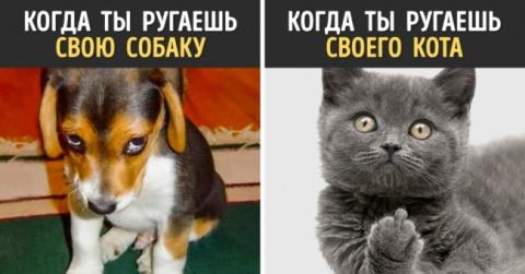 Эти фотографии - лучшие  доказательства того, что собаки и кошки — с разных планет