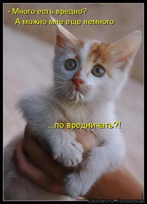 Свежая подборка котоматриц!))