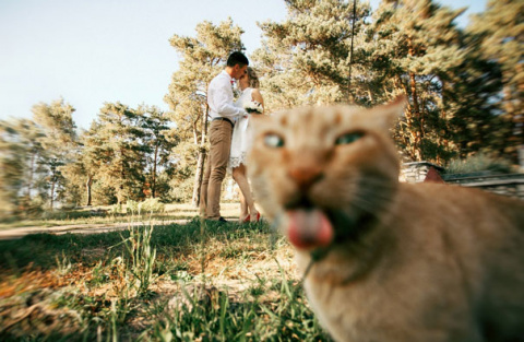 15 самых смешных кошачьих фотобомб