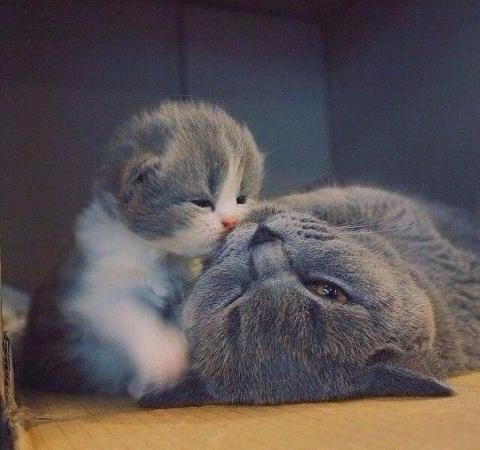 Берегите своих мам... Наступит время, когда вы будете скучать по ее объятиям!  ...