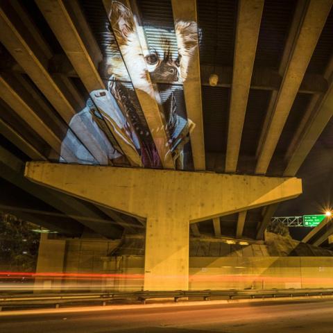 Цифровые животные на улицах Орландо