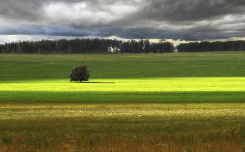 Красота одиноких деревьев
