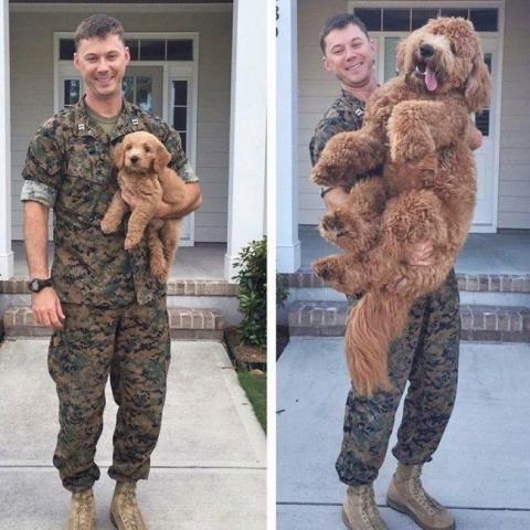 Собаки, которые слишком быст…