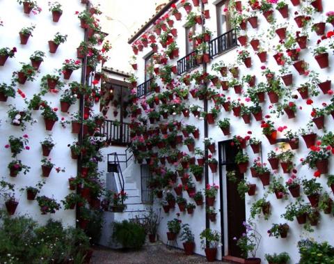 Прекрасный фестиваль цветов в патио (Кордова, Испания)