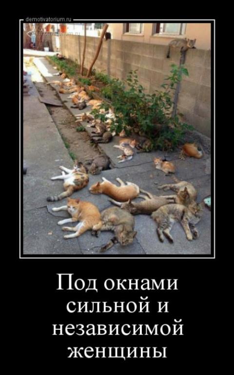 Попадают три кота в кошачий приют