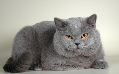Кот нахамил хозяину, а потом извинился. Очень смешной говорящий котяра(видео)