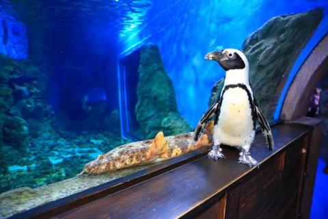 Жизнь одинокого пингвина