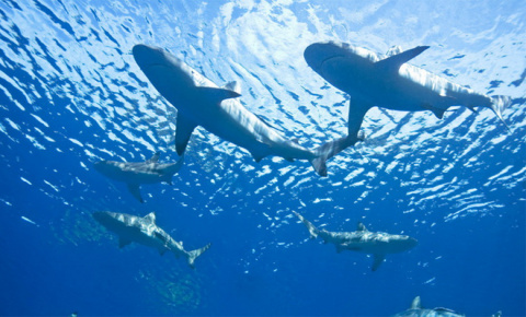 Израиль атаковали сотни акул