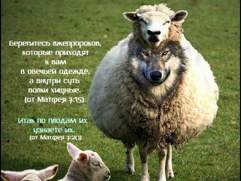 """Светлана Нелюбина: """"Не много…"""