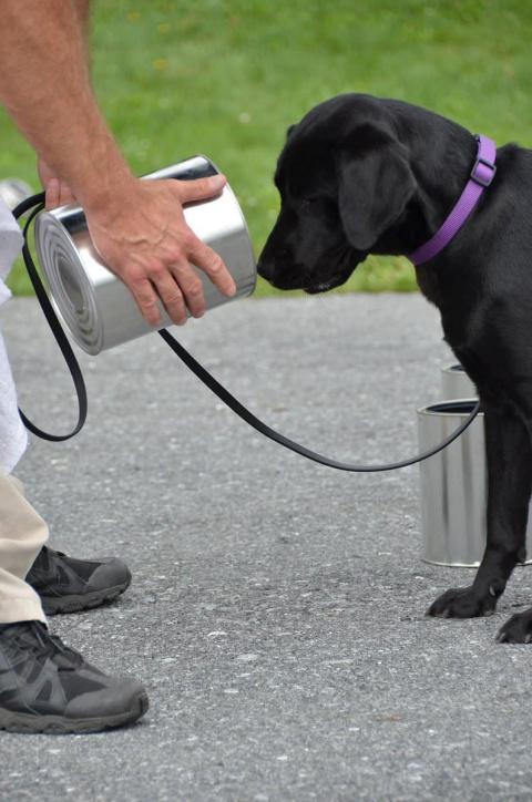 Эта собака прошла обучение в…