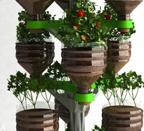 За помидорами отправляемся к пластиковому дереву