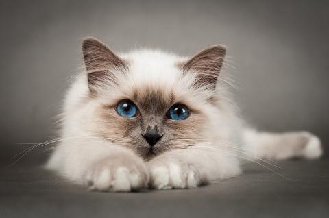 Веселые и позитивные котята …