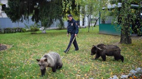 У полицейских Зеленограда появились медведи