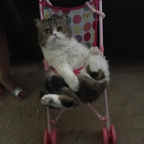 12 историй о том, что жить с домашним животным трудно, но весело