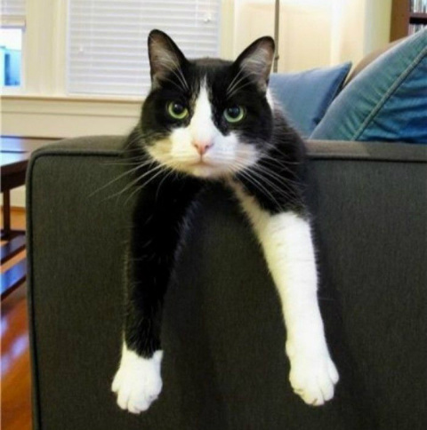Шкодливый кот ободрал угол д…